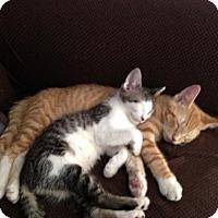 Adopt A Pet :: Ruffy - Kenosha, WI