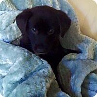 Adopt A Pet :: Graca D3274 - Shakopee, MN