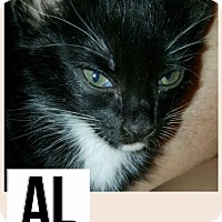 Adopt A Pet :: Al - Garland, TX