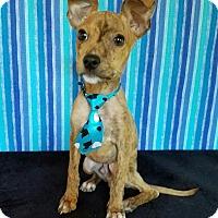 Adopt A Pet :: Bronson - Pluckemin, NJ
