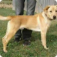 Adopt A Pet :: Casper - Cincinnati, OH