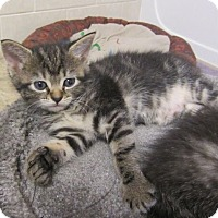 Adopt A Pet :: Liberty - Youngsville, NC
