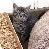 Adopt A Pet :: Jazzy - Lathrop, CA
