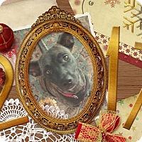 Adopt A Pet :: Bayou Too - Englewood, FL