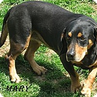 Adopt A Pet :: Mary - Shelby, NC