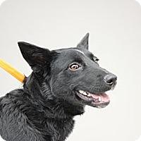 Adopt A Pet :: Venus - Roosevelt, UT