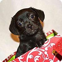 Adopt A Pet :: *Laney - PENDING - Westport, CT