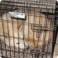 Adopt A Pet :: Wiley - Memphis, TN