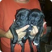 Adopt A Pet :: Daisy and Minnie - Marlton, NJ