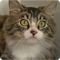 Adopt A Pet :: Puffy - Secaucus, NJ