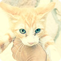 Adopt A Pet :: Joshua - Santa Monica, CA