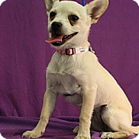 Adopt A Pet :: Derbi - Broomfield, CO