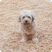 Adopt A Pet :: Pollyanna - Clarksville, TN