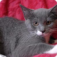 Adopt A Pet :: Penelope - Winchendon, MA