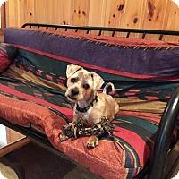 Adopt A Pet :: Casper - Rocky Mount, NC