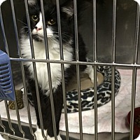 Adopt A Pet :: Jinxy - Byron Center, MI