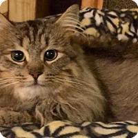 Adopt A Pet :: Nicholas - Buford, GA
