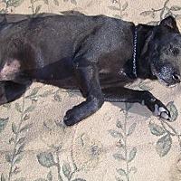 Adopt A Pet :: Michael - Glendale, AZ