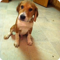 Adopt A Pet :: Bobby Mercer - Carteret/Eatontown, NJ