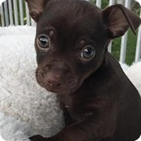 Adopt A Pet :: Finnegan - Loxahatchee, FL