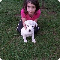Adopt A Pet :: Sam (ETAA) - Hagerstown, MD
