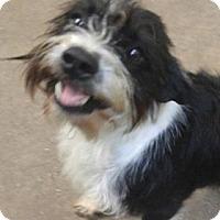 Adopt A Pet :: Duke - Killian, LA