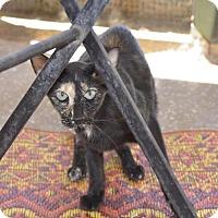 Adopt A Pet :: Karafuru - Glendale, AZ