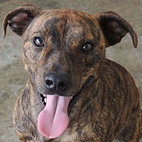 Terrier (Unknown Type, Medium) Mix Dog for adoption in House Springs, Missouri - Whiskey