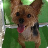 Adopt A Pet :: Archie, formerly Pancho - Las Vegas, NV