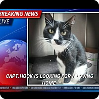 Adopt A Pet :: Capt Hook - Jackson, TN