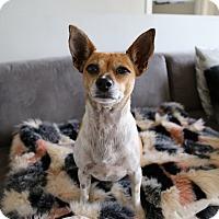 Adopt A Pet :: Sugar - Los Angeles, CA