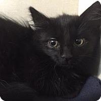 Adopt A Pet :: Carlie - Fort Collins, CO