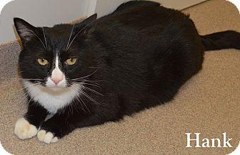 Domestic Shorthair Cat for adoption in Fryeburg, Maine - Hank