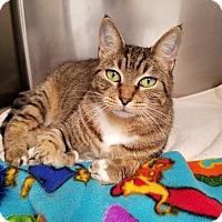 Adopt A Pet :: Attica - Umatilla, FL