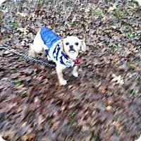 Adopt A Pet :: Josephina - Boerne, TX