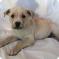 Adopt A Pet :: Max - Mooresville, NC