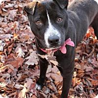 Adopt A Pet :: Lexa - McCormick, SC