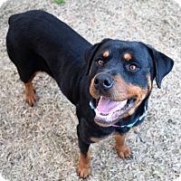 Adopt A Pet :: GRETA - Harrisburg, PA