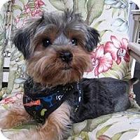 Adopt A Pet :: Timmy - Leesburg, FL