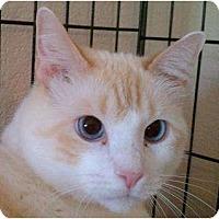 Adopt A Pet :: Coco IV - Austin, TX
