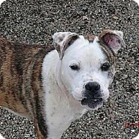 Adopt A Pet :: Patches-ready to play! - Sacramento, CA
