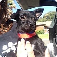 Adopt A Pet :: Mischievous - Calgary, AB