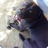 Adopt A Pet :: Charlie - Gadsden, AL
