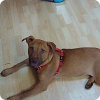 Adopt A Pet :: Mutt - Burlington, NJ