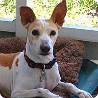 Adopt A Pet :: Lani - Jacksonville, FL
