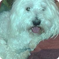 Adopt A Pet :: Remi - Littlerock, CA