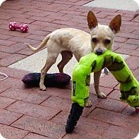 Adopt A Pet :: Mikey - Bellingham, WA
