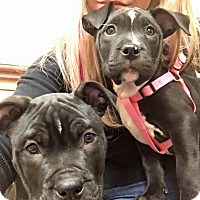 Adopt A Pet :: Mnnie - Las Vegas, NV