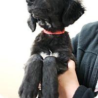 Adopt A Pet :: Moonlight - Appleton, WI