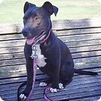Adopt A Pet :: Poppy - Castro Valley, CA